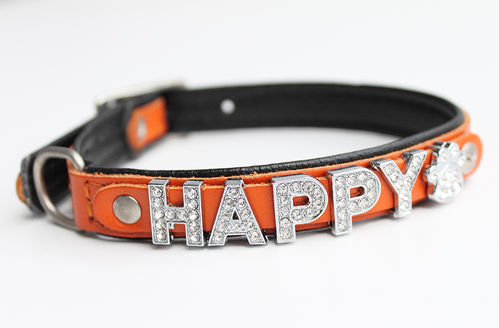 Hundehalsband Echtleder - ORANGE SERIES - Name - orange/schwarz